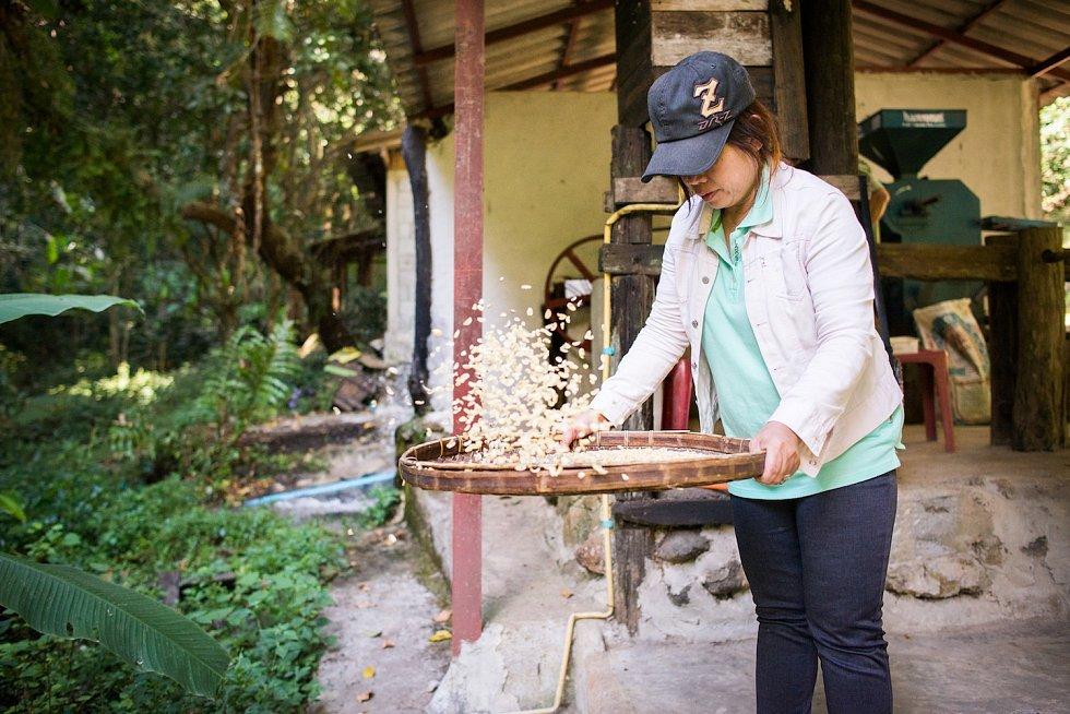 Zbylé slupky a dužina se pak spolu s kravským hnojem používají ke hnojení kávovníků.