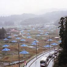 Projekt Slunečníky, realizovaný v USA a v Japonsku v roce 1991