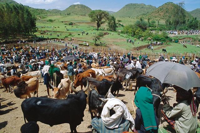 Dobytčí trh v etiopském Sentebe. Vládní plán na zábor zemědělské půdy byl spouštěcím mechanismem aktuálních protestů.