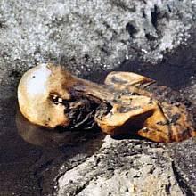 Tak ho našli 19. září 1991 pod alpským sedlem Hauslabjoch
