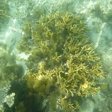 Pod hladinou u korálového útesu
