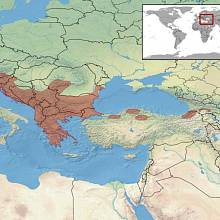Oblast výskytu zmije růžkaté