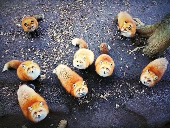1. místo v kategorii Animals: Erica Wu
