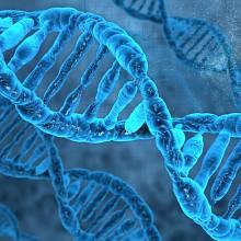 DNA se přizpůsobí životnímu prostředí velmi rychle.