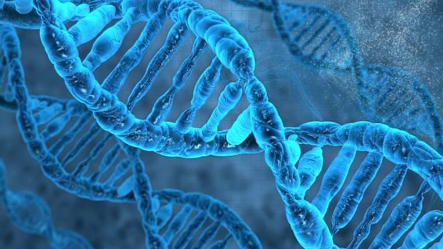 Co ukázaly výzkumy DNA českého národa