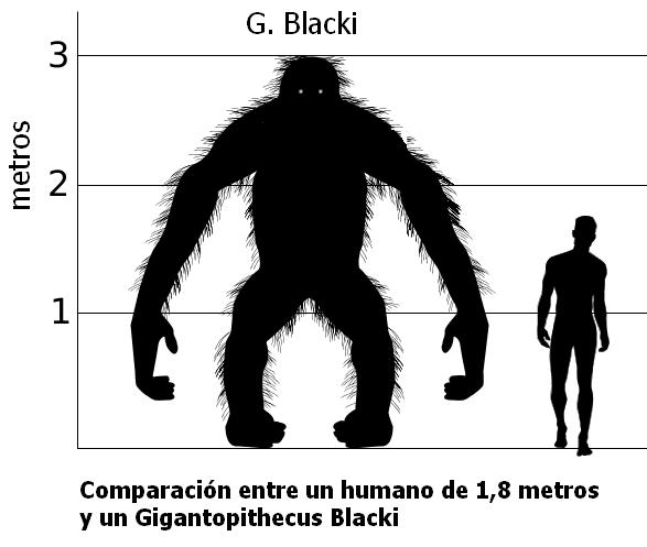 Jak vysoký byl největší lidoop světa. Aexistoval?