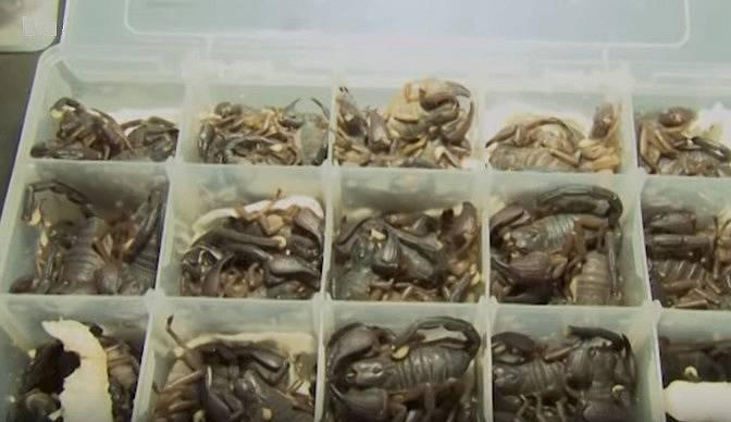 Škorpioni byli úhledně zabaleni v plastových krabičkách.