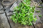Proti plynatosti zabírají některá koření a bylinky, jako třeba majoránka.
