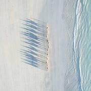 2. místo v kategorii cestování: Velbloudi na pláži, západní Austrálie