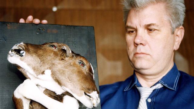 Zmutovaná zvířata se v Černobylu už nerodí, většina jich je naprosto zdravá.