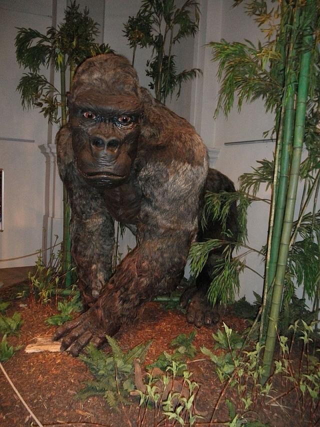 Restaurovaná podoba největšího lidoopa světa, Gigantopithecus blacki
