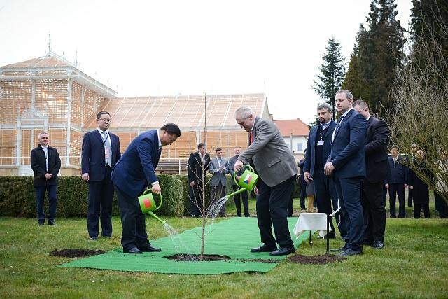Miloš Zeman spomocí svých přátel zOsvětiman kropí mladé dubisko totálním herbicidem. Záměrná protiruská provokace?