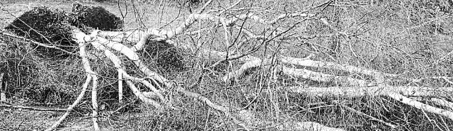 Tornáda unás většinou skončí vichřicí spolámanými stromy a zničeným vedením. Naštěstí nemají tak ničivé důsledky, jako jinde