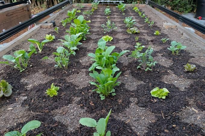 Každá rostlina dostane přesný díl vody podle svých nároků i podle vlhkosti půdy.