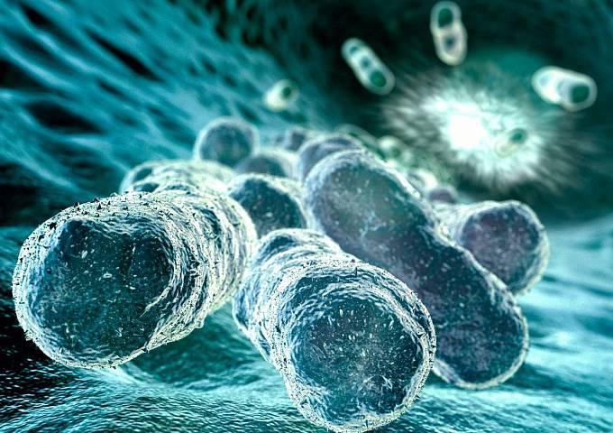 Ve Sverdlovsku zabíjela v roce 1979 bakterie sněti slezinné, ilustrační foto
