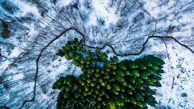 1. místo v kategorii příroda: Les Kalby Ris ve východní části Dánska