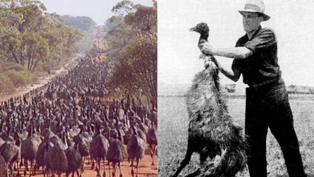 Válka s emuy