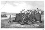 Sloni byli jako popravčí využíváni hlavně v Indii a Kartágu.