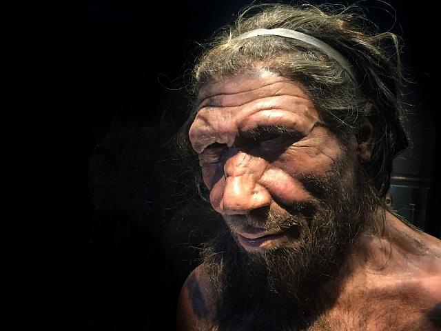 Rekonstrukce tváře neandrtálce v londýnském Natural History Museum