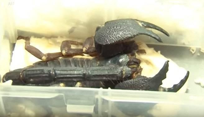 Škorpioni byli zabaveni a vráceni zpět do přírody.