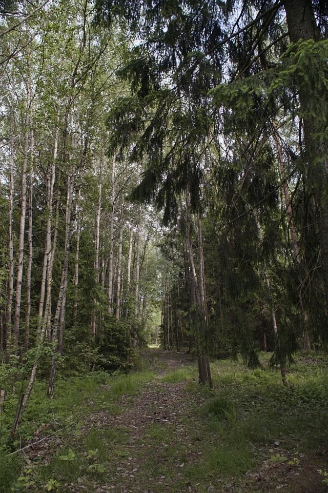Představte si procházet se po lesích před 450lety a potkat Genipperteingu