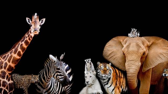 Většina velkých afrických zvířat je dnes ohrožena nejen pytláky, ale především devastací jejich životního prostředí