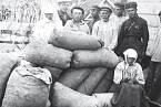 Ukrajinské obilí mělo nasytit jiné části Sovětského svazu.