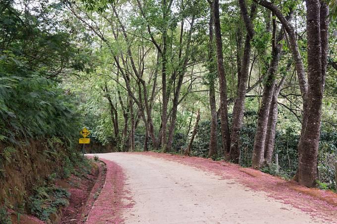 Cesta k hoře Doi Suthep, která se zvedá hned nad Chiang Mai. Nenajdete zde jen známý buddhistický chrám s výhledem na město, ale i krásný tropický les a několik vesniček, kde žijí thajské minority.