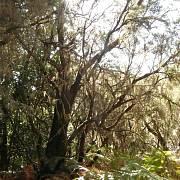 Vavřínový les