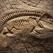 Fosilní model dinosaura