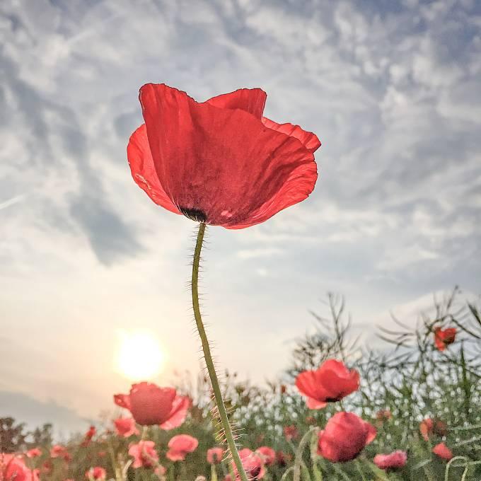 1. místo v kategorii Flowers: Lone Bjorn