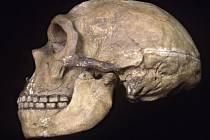 Neandertálec. V roce 1856 objevil profesor Carl Fullroth při procházce v údolí Neanderthal u německého Düsseldorfu zbytky lidské kostry. První prozkoumané fosilie pravěkého člověka spolu s Darwinovou teorií změnily pohled na pravěk.