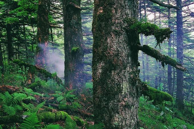Hubei Shennongjia je oblast v centrální části Číny, která dodnes chrání největší kus původního lesa včetně vzácných živočišných druhů.