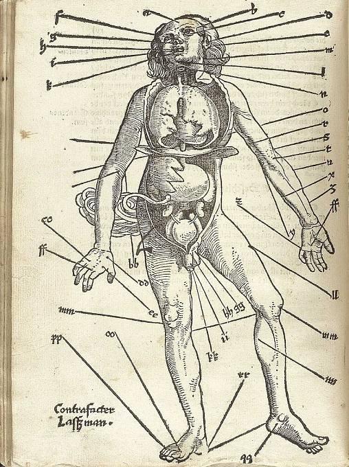 Body vhodné pro pouštění žilou podle lékaře Hanse von Gersdorffa (16. století)