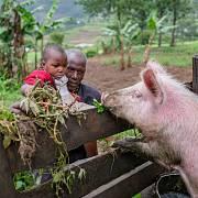 Unicef spouští kampaň na podporu nákupu domácích zvířat pro Rwandu