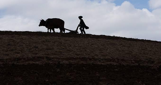 Česká organizace Člověk v tísni zde představuje a zavádí nové zemědělské metody, plodiny a technologie, školí místní farmáře a zřizuje ukázková políčka. Doposud tak podpořil více než 26 000 farmářů, zřídil 100 nových skleníků a 351 ovocných sadů a školek.