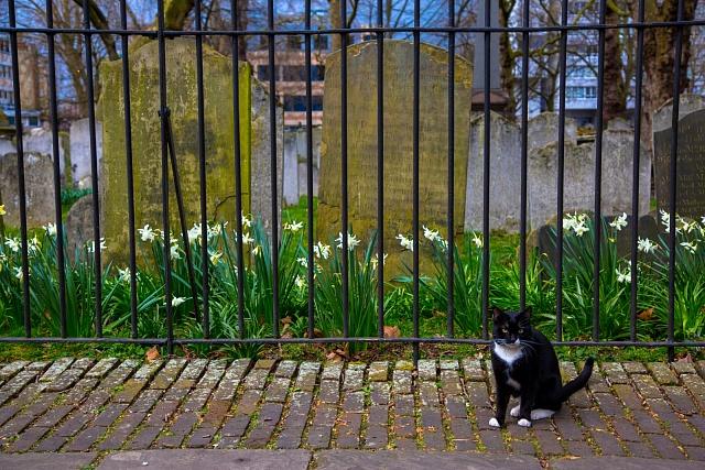 Kočka v Londýně, ilustrační foto