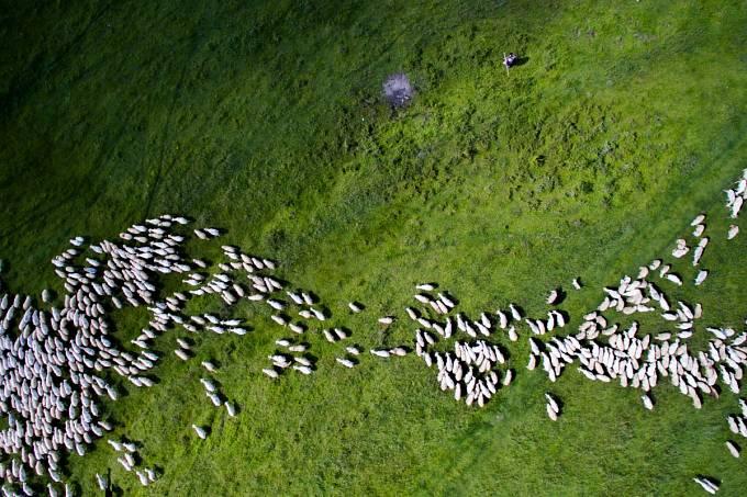 2. místo v kategorii příroda: Stádo ovcí, Rumunsko