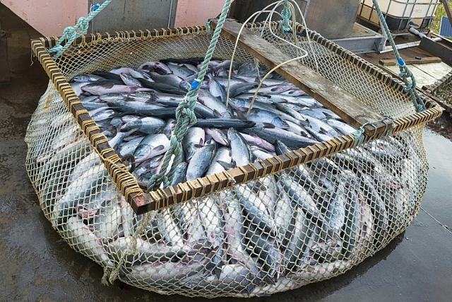 Rybolov na širém moři brzy vymizí.