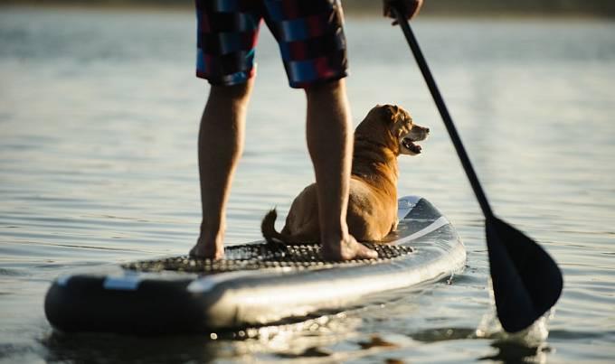 Na paddleboard můžete vyrazit i se svým psem.