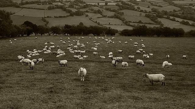 Zdrojem nákazy mohlo být maso jatečních zvířat, obsahující spóry anthraxu.