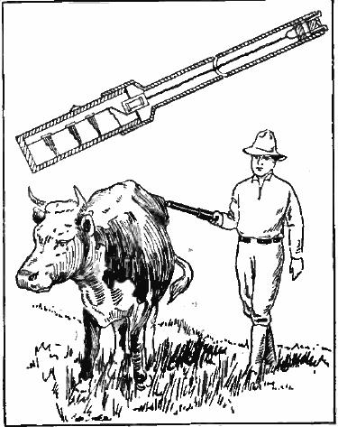 Elektrický prut se používal zprvu na zvířatech