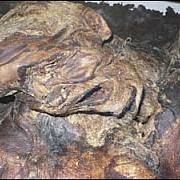 Lindowská žena. V roce 1983 bylo v močálu u anglického Manchesteru nalezeno torzo těla ženy. Policii se dokonce jeden muž přiznal k vraždě manželky, ale ukázalo se, že pozůstatky jsou staré až 2 tisíce let. Dotyčný byl přesto odsouzen.