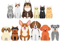 Kočky a psi. Ilustrační foto.
