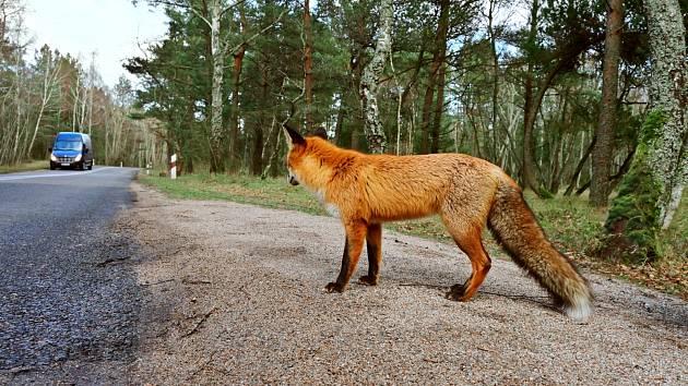Tady dávají lišky dobrou noc. Ilustrační foto.