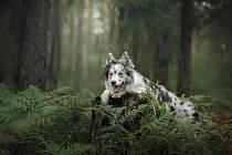 Pes. Ilustrační foto.