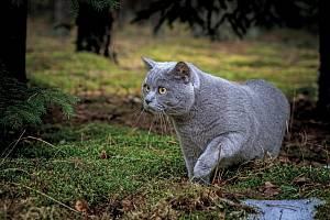 Kočka v lese. Ilustrační foto.