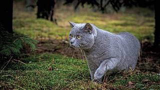 mastné kočičí galerie