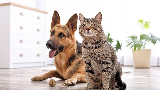 Pes a kočka. Ilustrační foto.