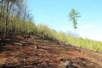 Požár lesa u Kryr.